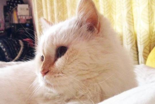 【老貓照護】你可知道認知障礙症?
