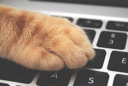 【工程師神救援】「當貓咪踩過我的鍵盤」成貓奴界熱門話題