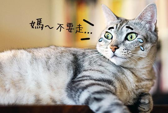 【貓寶住宿&保母大哉問】想找到適合的貓旅館?一定要問的八大問題!