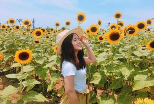 季節限定的「金黃色花海」,一起追尋全台8大賞花專區!