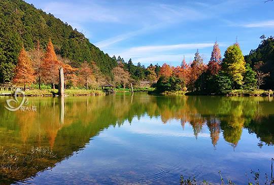 秋冬時節,明池落羽松恰似楓紅