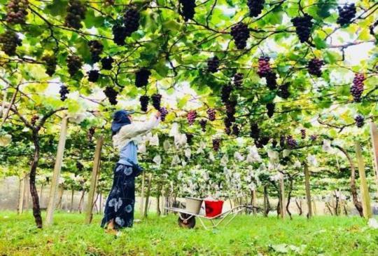 採果何處去?走吧!來趟水果之旅,自己要吃的水果自己採