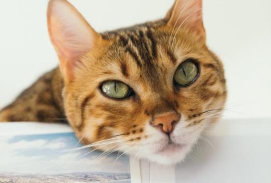 【動物行為專家不藏私】教你和貓咪溝通的6種方式
