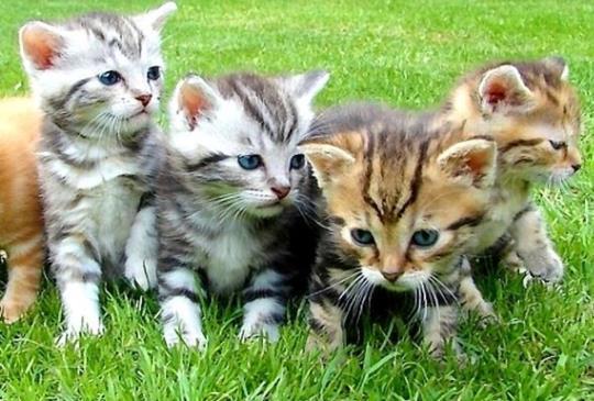 愛滋貓不能和未帶原的貓咪一起生活!?誤會可大了!