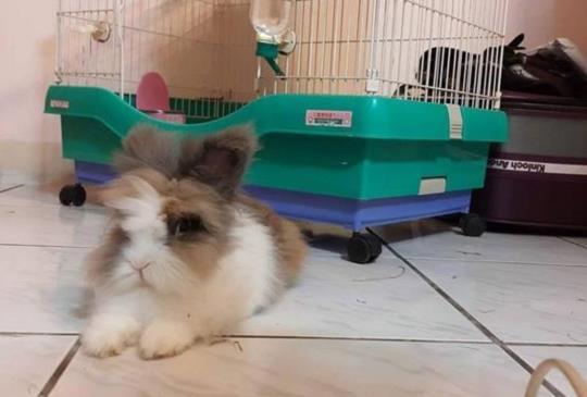 【我叫Pucca,今年10歲,是隻兔子型態的神獸】