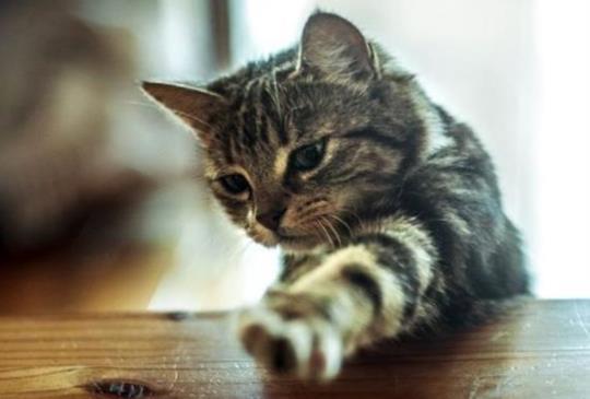 【寵物小學堂】飼料叼出碗比較好吃?