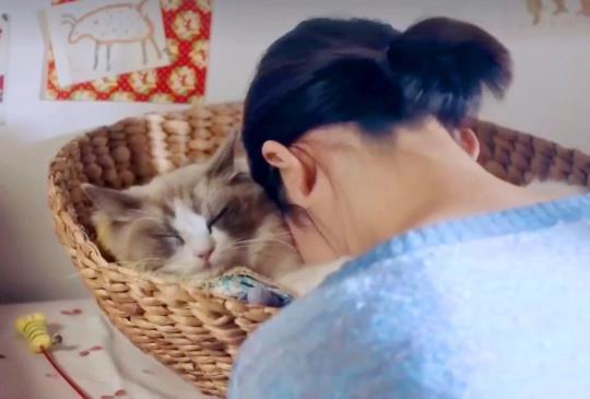 【Google因貓咪而存在】廣告中貓咪軍團洗腦:為了我,不買一台嗎?