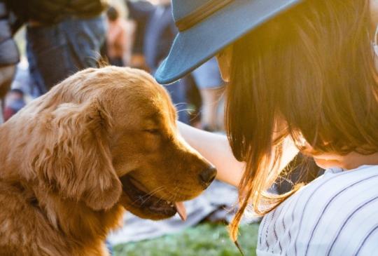 把握這幾個原則,養出自信的好狗狗