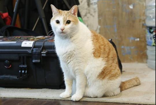 你家的貓咪會咬人嗎?來看看家中主子是後宮貓咪的哪一類呢?