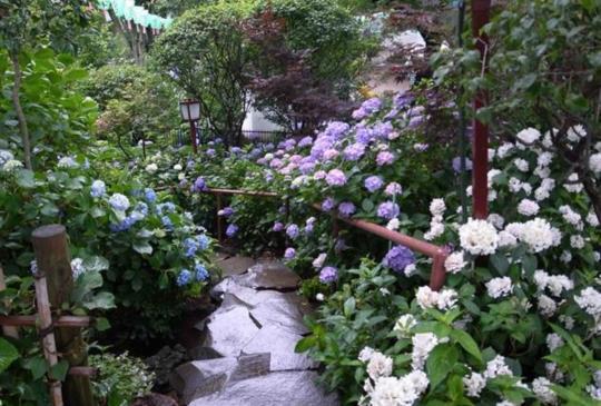 【日本‧6月祭典懶人包,參加慶典體驗當地風俗文化】~日本文化特搜