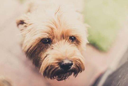 中獸醫師談:如何以食療幫寵物護肺及免疫