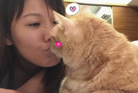 【讀喵術】搞懂貓咪到底在『喵~』什麼!(完)