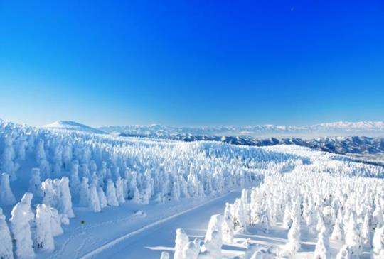 【冬季限定!置身山水潑墨畫,全亞洲最美雪景就在日本,纜車俯視下的藏王樹冰好感動啊】