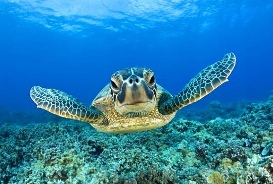 澳洲海洋生物篇
