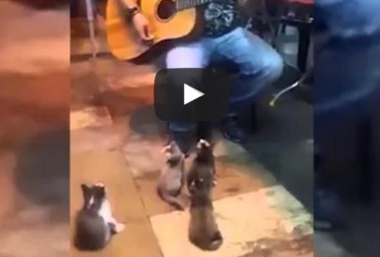 【奶貓啦啦隊】小小聽眾們專心聽街頭藝人唱歌 還跟著音樂點頭