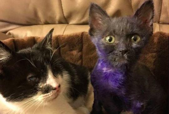 【開心結局】當初受虐的「紫色小貓」現在已經蛻變成美麗的貓並且找到好朋友了!