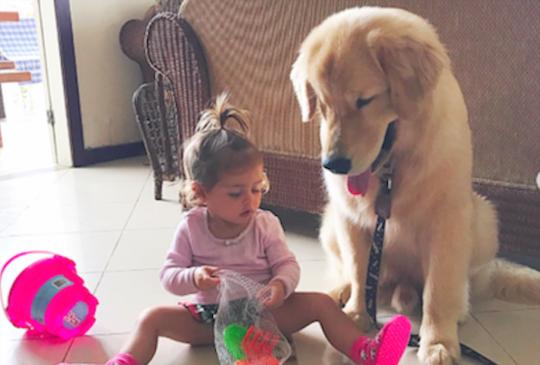 從小陪伴女童成長的每一天,當小主人要離家上課,狗狗卻難掩難過的心