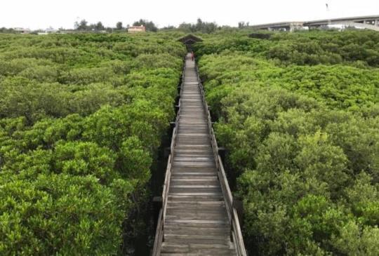 【新竹.新豐紅樹林】水上綠色隧道的美麗與哀愁