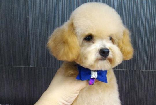 不論台灣還是中國 寵物美容業最大隱憂?-專訪戴沛頎老師