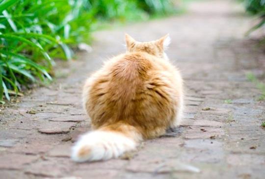 將近兩千多個日子的實地觀察,貓島科學家告訴你他眼中那些貓咪是什麼樣子