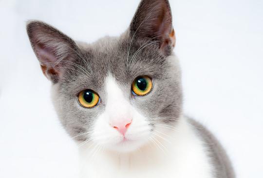 心中住了一隻貓:其實我們不懂貓
