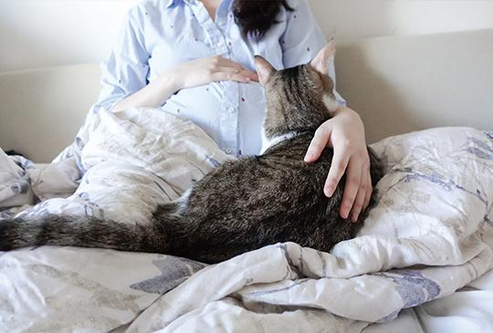 【我的貓系生活】懷孕的日子還好有貓在