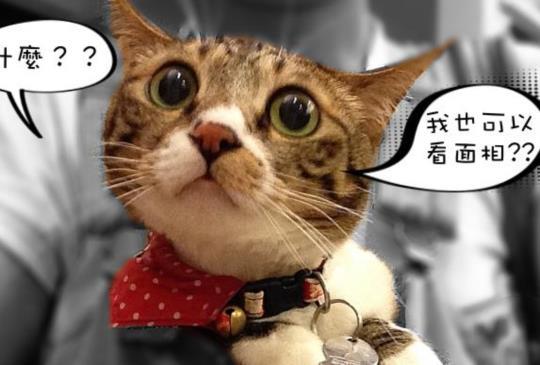 貓咪也能看面相?!研究顯示「貓咪臉型」可發現貓咪個性