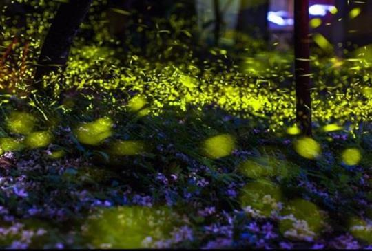 【新竹】5大景點讓你遇見美麗的精靈「螢火蟲」