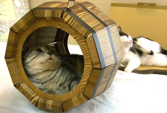 【瘋狂一下】可躺可玩可置物的搞笑瘋狂貓咪桶