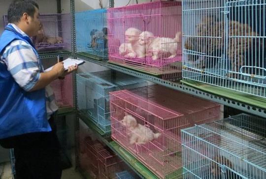 非法寵物繁殖場長這樣,你還要用新台幣支持他們嗎?