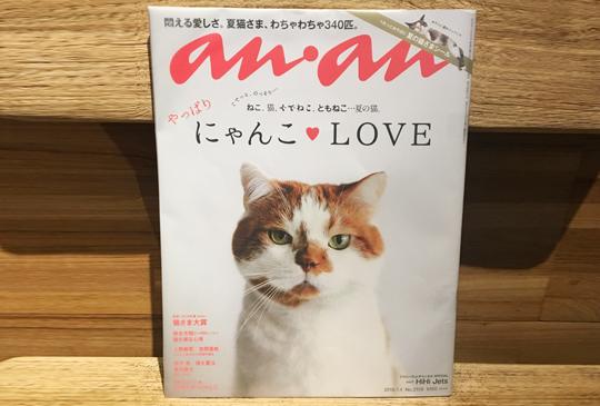 貓咪保母樂Talk系列│an.an 超人氣貓咪特輯,看完讓人好想吸貓