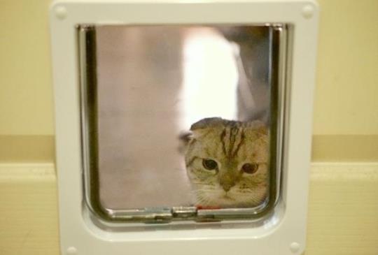 【貓門・狗門】安裝7大步驟詳細教學