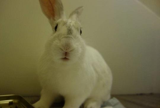 【強寒拉警報】兔孩們也需要保暖嗎?
