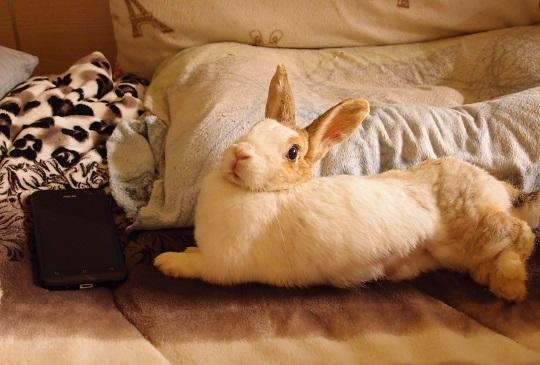 【關於兔兔的十個小秘密】身為兔奴的你不可不知(下)