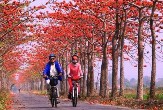 【季節限定的木棉花正盛開!到全球15條最美樹蔭花海街道騎免費騎單車賞木棉!】