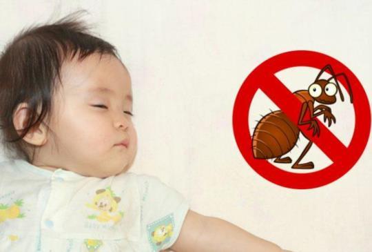 家裡有螞蟻該怎麼消滅?快用這招去除螞蟻氣味!