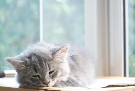 【新冠肺炎】酒精棉片拿來防疫「沒路用」,留給有需求的病貓吧