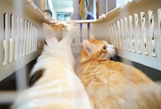 【我的貓系生活】趁貓年輕時該訓練的事情