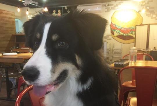 義式餐廳藏飛盤狗冠軍!從餐前湯就能喝出店主的堅持:食。光機