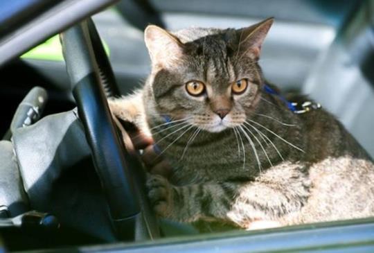 【新動保法報你知】開車撞死貓咪,是否有罰則?2015新動保法修訂完成,動保意識抬頭