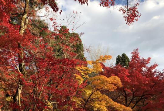 【日本】京都賞楓最佳景點嚴選,不可錯過的楓紅時刻