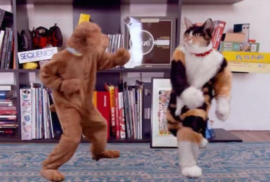 【人氣影片】當主人不在家,就是貓狗展現真功夫的時候,最後到底鹿死誰手?
