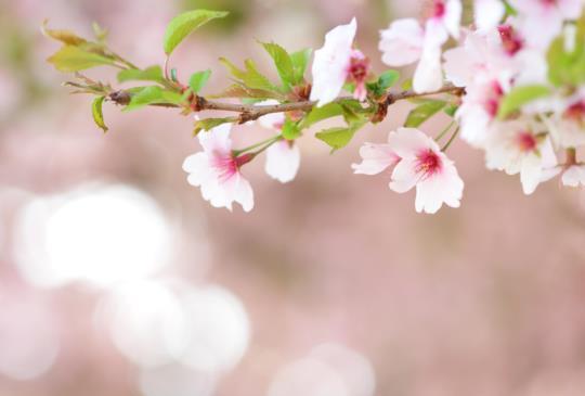 每一朵花在盛開之前都做了長久的預備