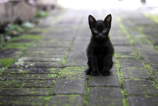 當貓遇到現代貓奴v.s.日本文豪貓奴