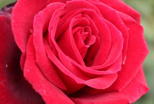 【瑞士】玫瑰公園絕讚制高點 一覽伯恩舊城區