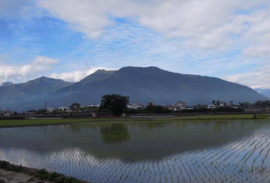【綠波春浪滿前陂】池上-縱情悠遊米的故鄉