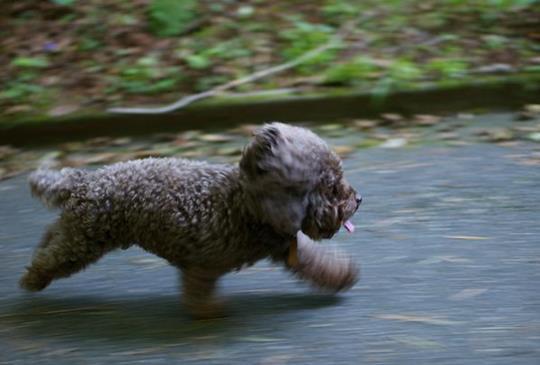 中獸醫師談:造成寵物疾病的六種邪氣(一):風