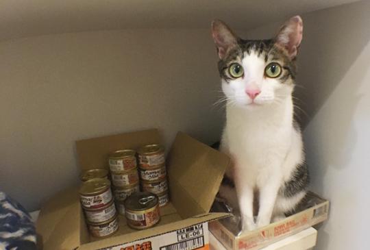 貓奴界的新興行業──到府代養貓咪保母