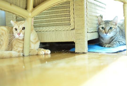 貓咪的異想空間