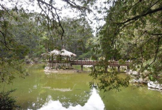 【嘉義】走入雲海的故鄉 阿里山國家森林遊樂區